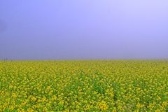 Yellow Dreamy Morning stock photography