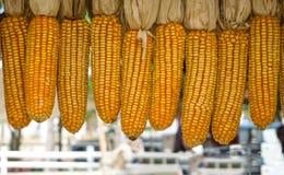 Yellow dried corn bundle background Stock Photos