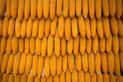 Yellow dried corn bundle background Stock Photo