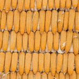 Yellow dried corn texture Royalty Free Stock Images