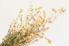 Yellow Dried flower vintage style Royalty Free Stock Photography