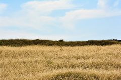 Yellow dried grass in the field Royalty Free Stock Photography
