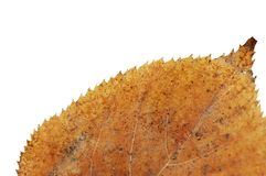 Yellow dried leaf Stock Images