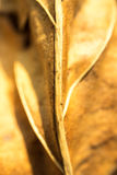 Yellow dried leave macro blurry focus. Stock Image