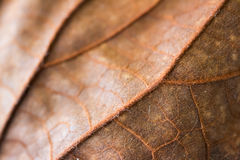 Yellow dried leave macro blurry focus. Royalty Free Stock Photo