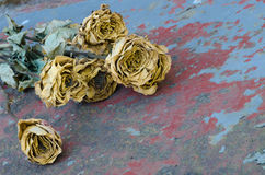 Yellow dried roses Royalty Free Stock Image