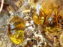 The yellow drop of resin Stock Photos