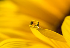 Yellow droplet stock image
