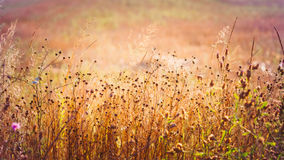 Yellow Dry Autumn Grass On Meadow. Toned Instant Stock Photo