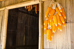 Yellow dry corn on bamboo. Stock Photo