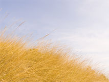 Yellow dry grass Royalty Free Stock Images