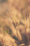 Yellow dry grass in desert Stock Photos