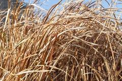 Yellow dry grass field Stock Photos