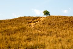 Free Yellow Dry Grass On Hill Face With A Tree On Top Stock Photos - 116055483