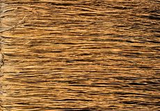 Yellow dry grass surface Royalty Free Stock Image