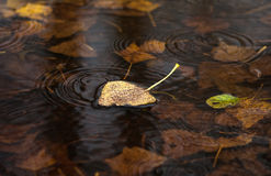 Yellow dry leaf on water Royalty Free Stock Images