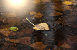 Yellow dry leaf on water Stock Photography