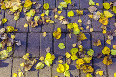 Yellow and Dry Leaves on Road from Brick Stock Image