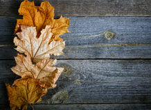 Yellow dry maple leaves on an  board Stock Photo