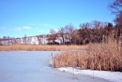 Yellow dry reeds on lake covered with ice bank with willow trees without leaves covered with snow, blue cloudy sky. Background stock photo