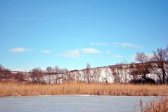 Yellow dry reeds on lake covered with ice bank with willow trees without leaves covered with snow, blue cloudy sky. Background royalty free stock image
