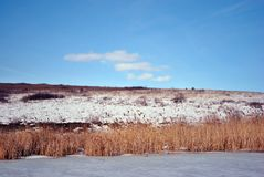 Yellow dry reeds on lake covered with ice bank with willow trees without leaves covered with snow, blue cloudy sky. Background stock photos