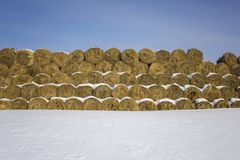 Yellow dry round haystacks lie in rows against the background of pure white snow under a blue sky stock photos