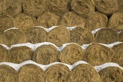 Yellow dry round haystacks lie in rows in close-up under white snow. natural surface texture stock images
