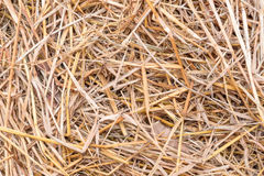 Yellow dry straw Royalty Free Stock Image