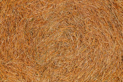 Yellow dry wheat straw Royalty Free Stock Image