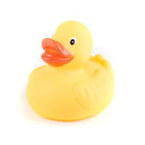 Yellow duck Stock Photography