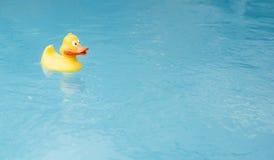 Free Yellow Duck Royalty Free Stock Photo - 21369625
