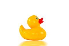 Yellow duck royalty free stock photos
