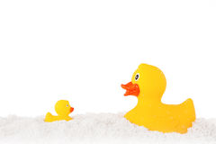 Yellow duck and ducky family and powder isolated on white Stock Images