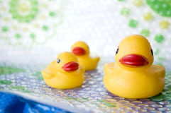 Yellow Duck Family Royalty Free Stock Photography