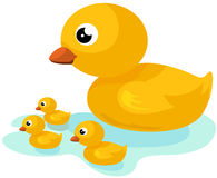 Yellow duck family Stock Images