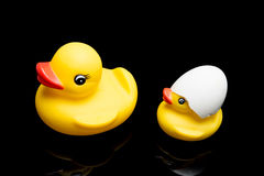 Yellow Duck family. Safety first concept stock image