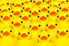 Yellow duck. Group for yellow rubber duck Stock Photography