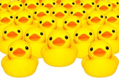 Yellow duck isolated. Group for cute yellow rubber duck on white colored background Stock Images