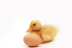 Free Yellow Duck ,sitting By The Egg Royalty Free Stock Photo - 17361985