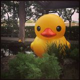 Yellow duck in Taipei Stock Images