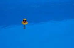 Yellow duck thermometer on blue water Stock Image
