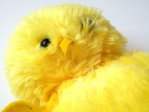 Yellow duck toy. S on white background stock image