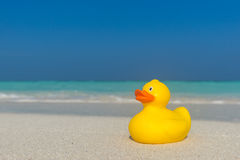 Yellow duck on the tropical beach. Concept travel and vacation Stock Photos
