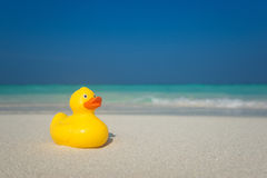 Yellow duck on the tropical beach. Concept travel and vacation Stock Image