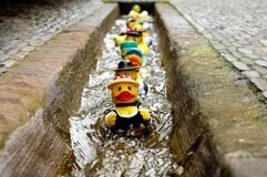 Yellow Duckies in Line on a Concrete Floor stock image