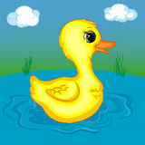 Yellow Duckling Character on the Pond Royalty Free Stock Photo