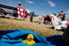 Yellow duckling in Koper royalty free stock image