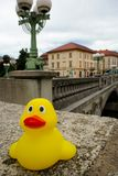 Yellow duckling in Ljubljana. Rubber duck around the world Royalty Free Stock Photography