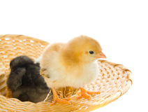 Yellow ducklings on a white background Stock Photography
